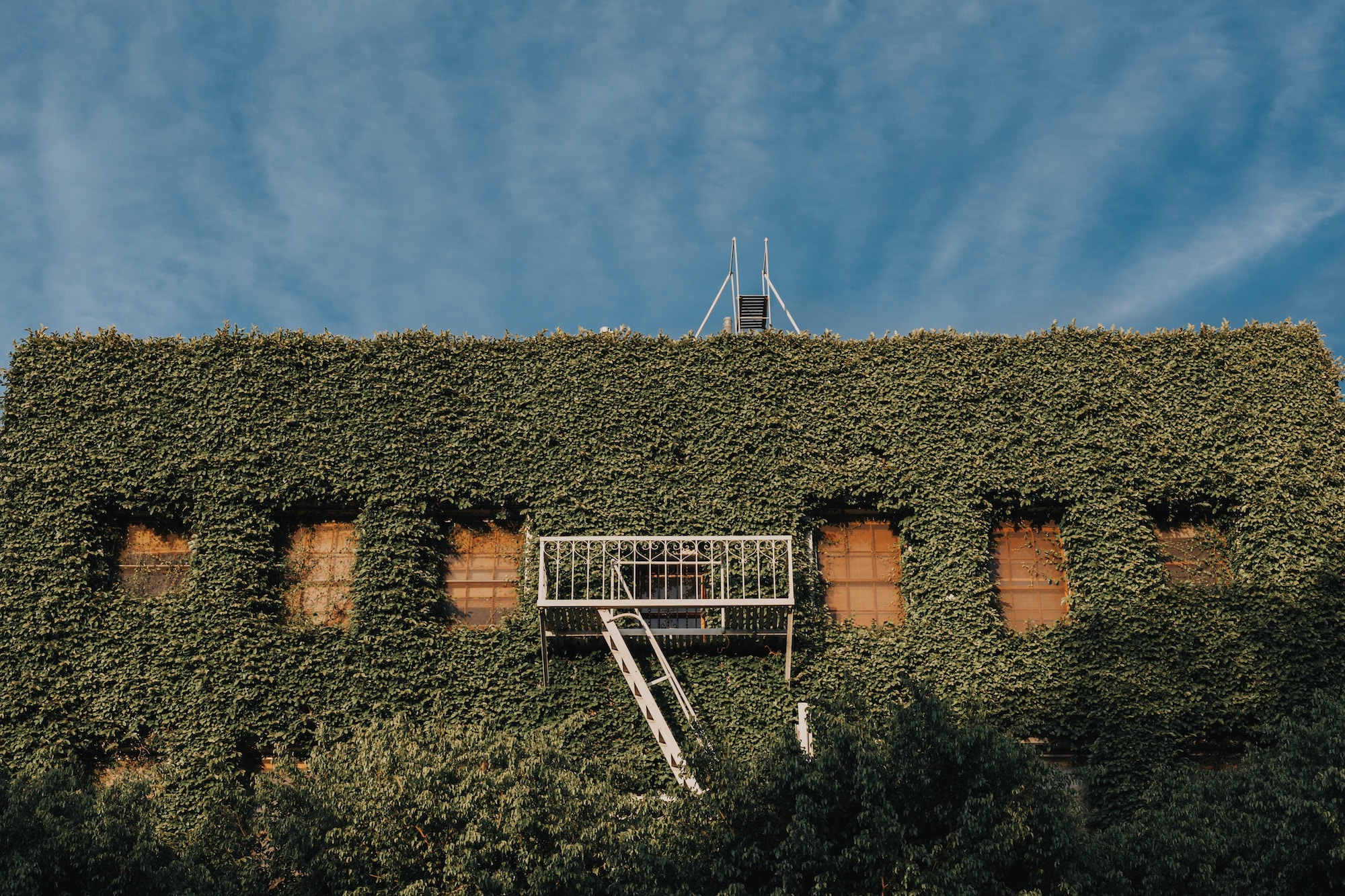 a building is engulfed in vines with only the windows visible